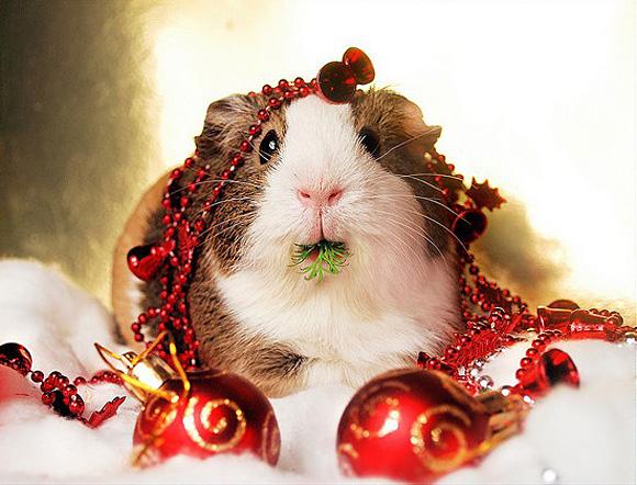 Christmas-Animals-23