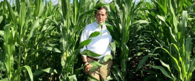 corn ABC_ted_cruz_field_dreams_jef_150717_12x5_1600