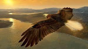 eagle imagesTYB0S7CE