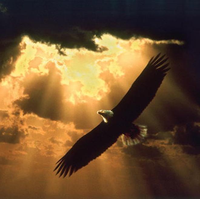 eagle Soaring_eagle_150
