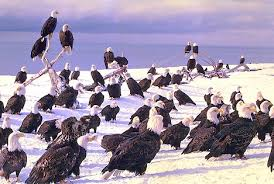 eagles untitled