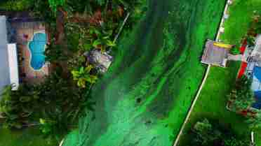 ERIN 636671400570230858-Algae-Bloom