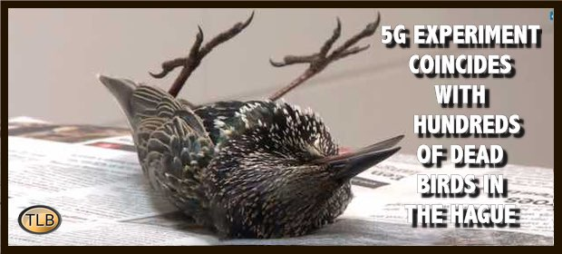 birdHague5G